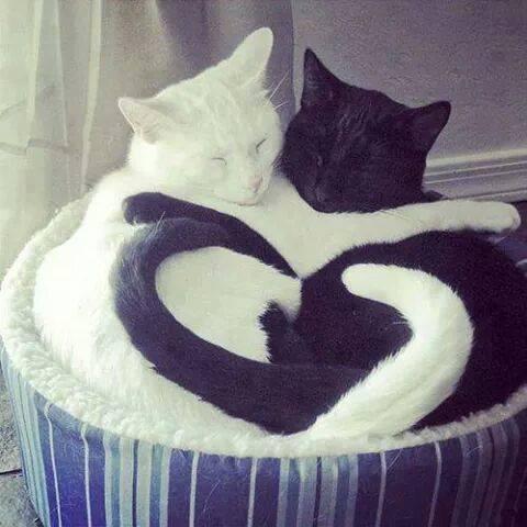 Un gesto que puede salvar vidas de gatos que se cobijan del frìo