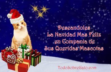 navidad-todo-sobre-gato-1