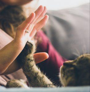 ¿ Sabes por què los gatos se frotan contra las piernas de sus amigos humanos?