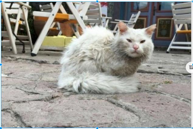 Cómo tratar el pelo apelmazado de los gatos.
