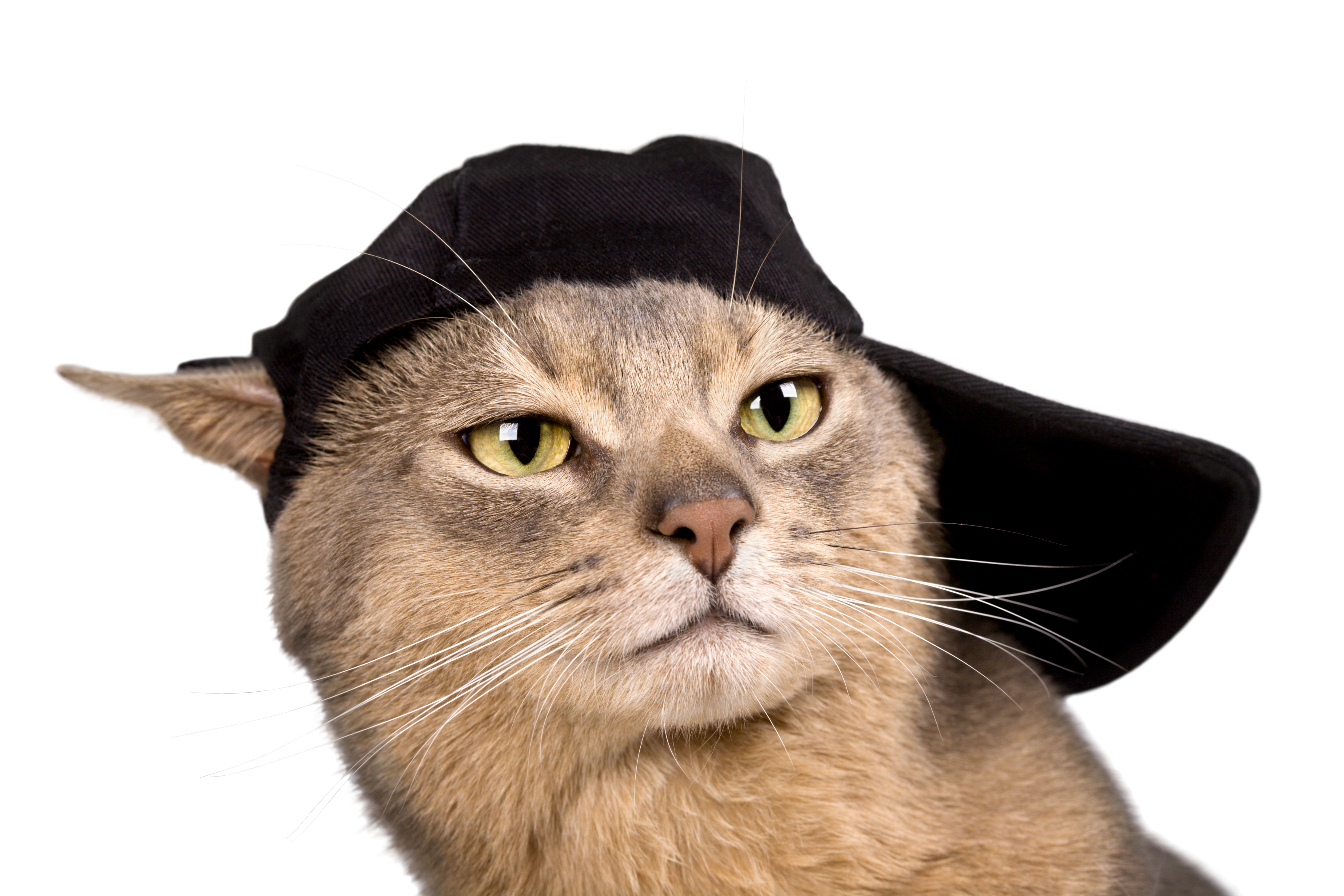 20 Curiosidades sobre los gatos