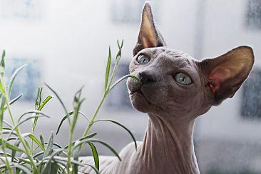 8 puntos a tener en cuenta antes de decidir llevar un gato a tu casa.