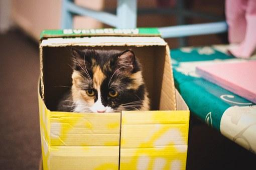 Un misterio resuelto: ¿Por què le gustan las cajas a los gatos?