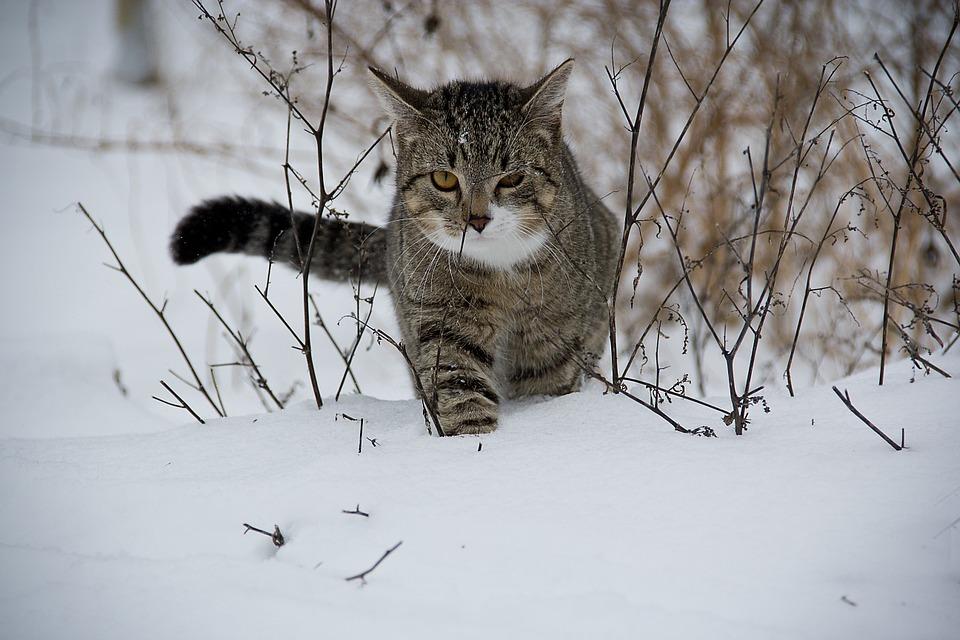 3 Factores que pueden influir para nuestro gato evite relacionarse con otros gatos.