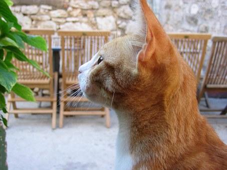 ¿Còmo eliminar las pulgas de nuestro gato?