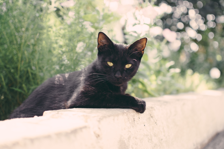 5 razones  para adoptar un gato negro