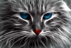 Gato, Energia, Mundo vitales energetico, protectores