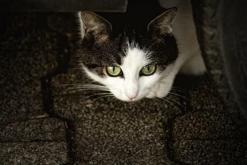 Cuatro cosa que estresan a tu gato.
