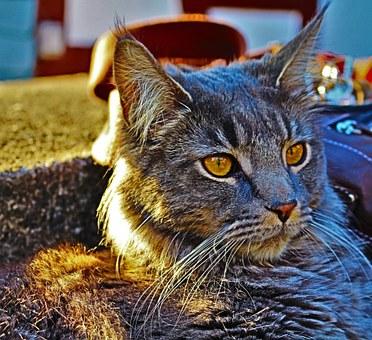 Los gatos, nuestros protectores en el mundo energètico