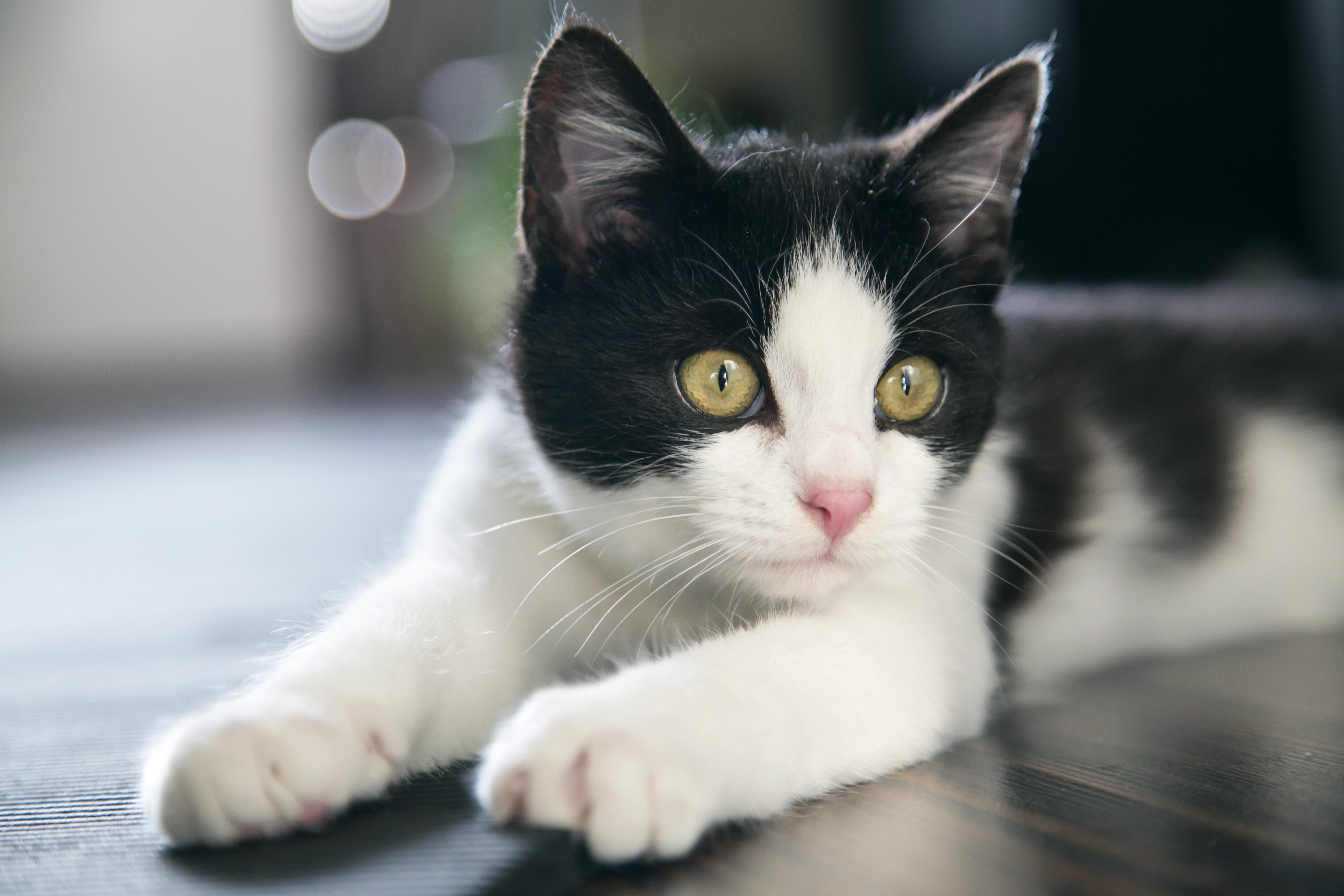 5 síntomas de estrés en tu gato….y una probable solución…