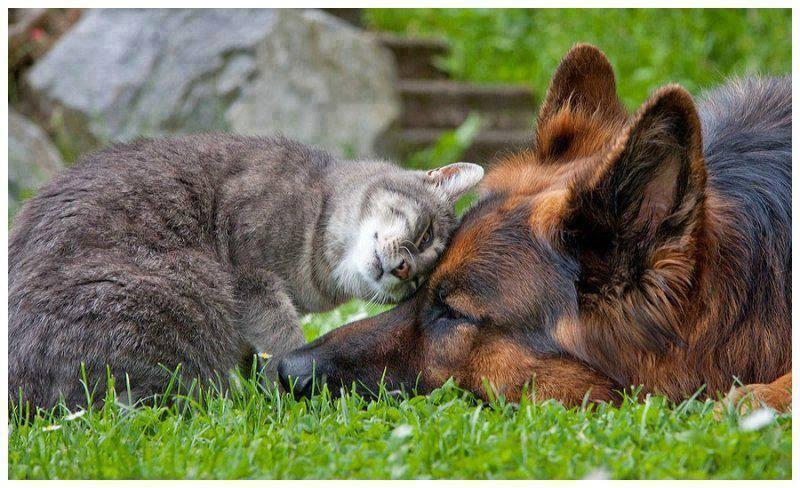 Amigos son los amigos….