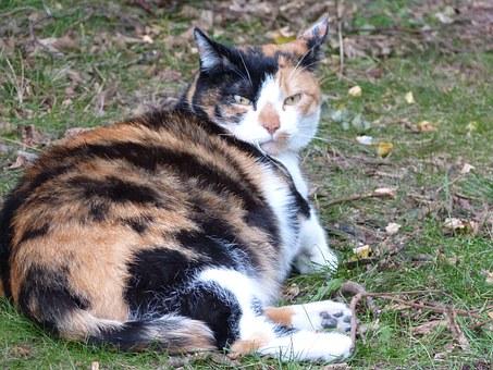 9 signos de parto en las gatas
