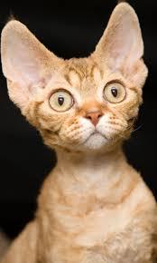 3 Factores por los cuales nuestro gato no se deja acariciar ¿Los conoces?