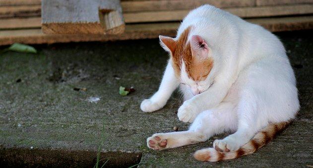 ¿ Qué  refleja nuestro gato cuando se lame de manera exagerada?