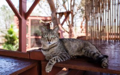 5 Factores que pueden causar letargo en tu gato