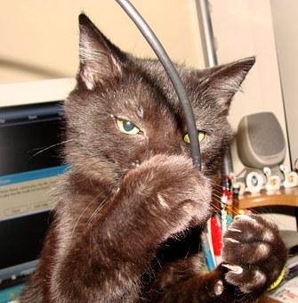 Juguetes para gatos mayores