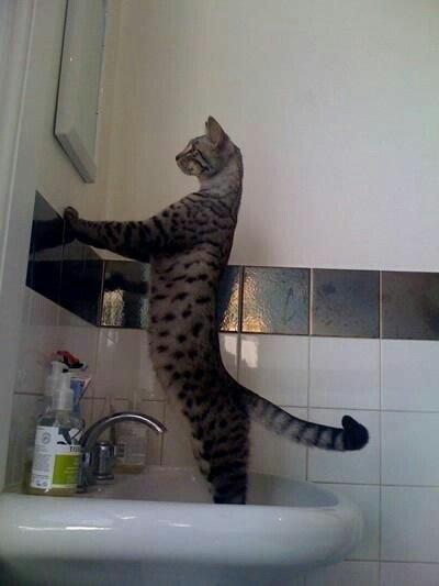 11 fotos que muestran lo extraños que pueden ser los gatos