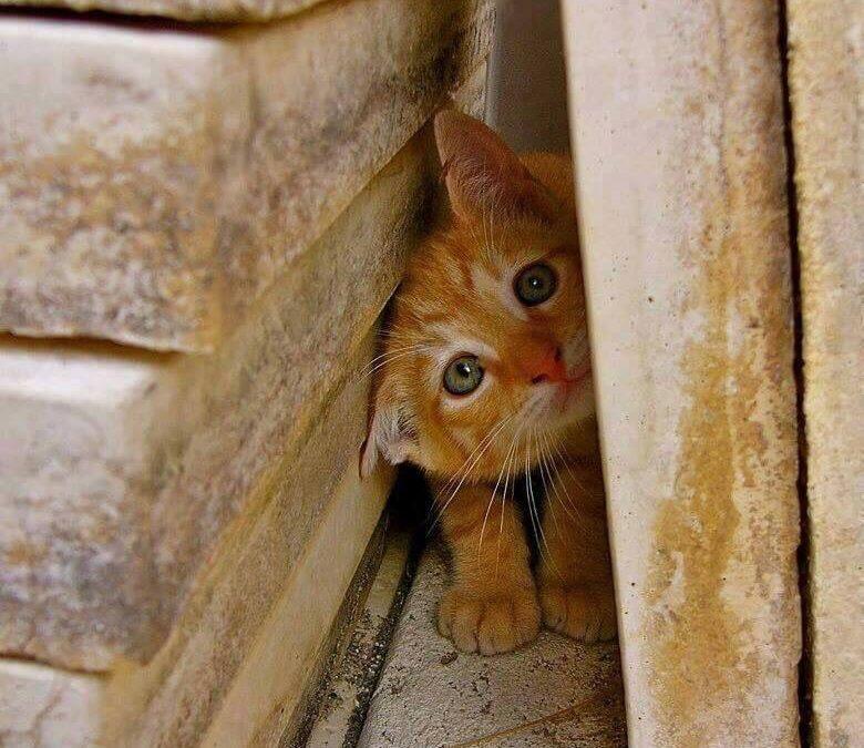 ¿ Por qué mi gato se esconde cuando viene gente?