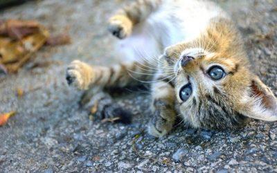 ¿ còmo puedes ayudar a los animales afectados por el sismo de Mèxico?
