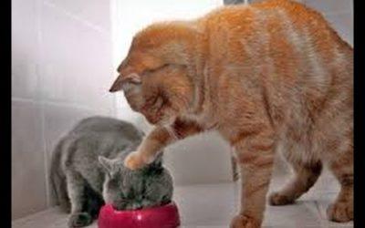 ¿Te animas a prepararle una tarta de atùn a tu gato?