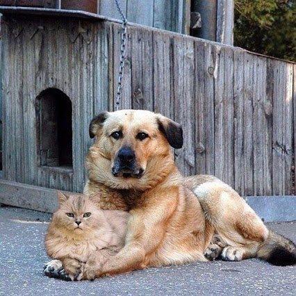 Sanar gatos y perros, a travès de la mùsica.