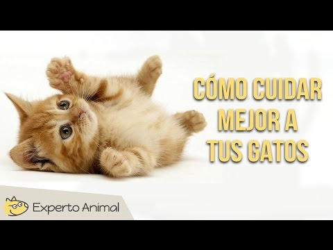 Consejos para cuidar mejor a tus gatos