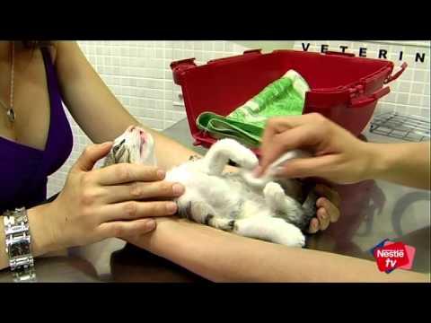 Cuidar a un gatito en sus primeras semanas – Mascotas Nestlé TV