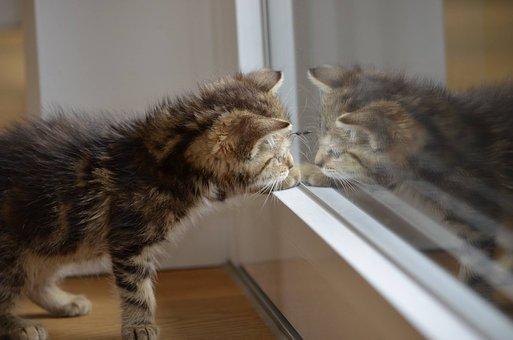 ¿ Sabes què es hiperestesia felina ò Sìntoma del gato nervioso?