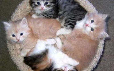 ¿ Por què te gustan los gatos?