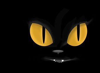 Refugio dice que no quieren adoptar gatos negros porque no se ven bien en la selfie