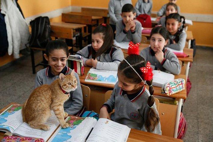 "¿Conoces al ""Gato estudioso""? ( Historia real)"