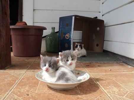 8 Causas por las cuales tu gato no usa el arenero