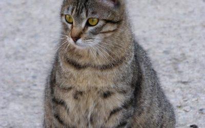 6 Tips que te permitiràn saber si tu gata està embarazada.