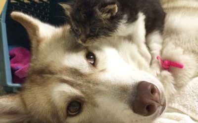 Perra adopta a gatito sin esperanzas de sobrevivir