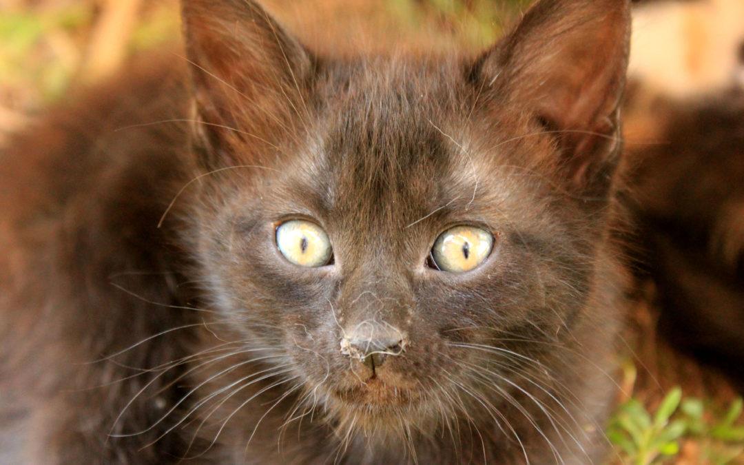8 Lecciones que nos brindan los gatos