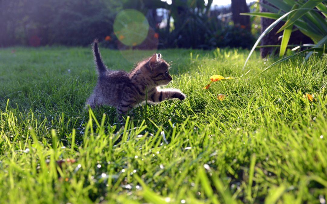 ¿Se puede pasear a un gato?