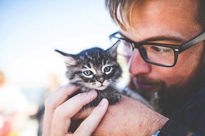 7 tips para cuidar a un gatito sin mamá