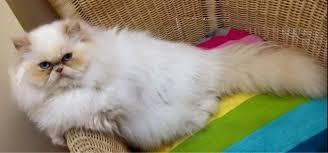 10 tips que haràn que una mudanza no estrese a tu gato