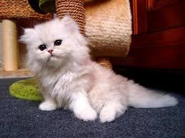 ¿ Sabes si tu gato sufre de pica ó malacia?
