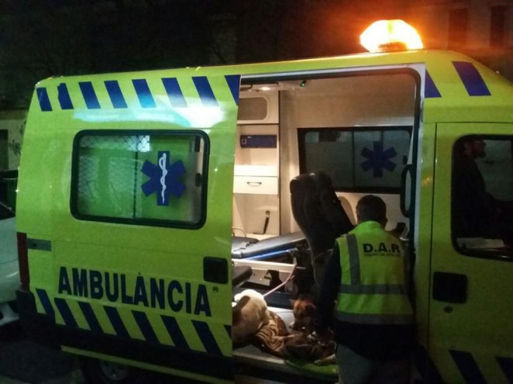 Ùnica en el mundo: ambulancia para gatos y perros