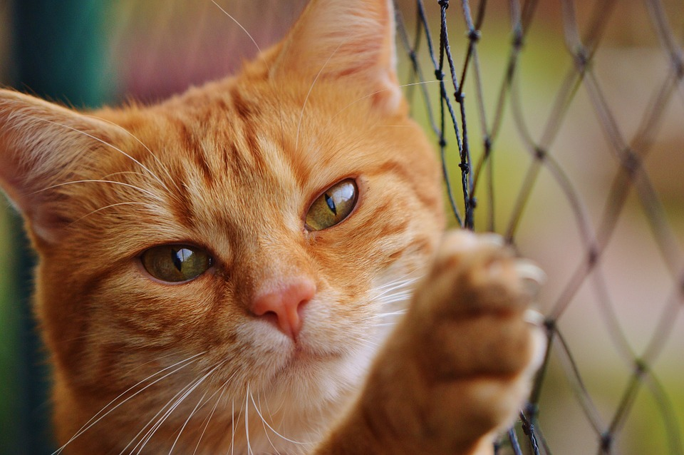 Consejos para hacer más tranquila la senectud de tu gato