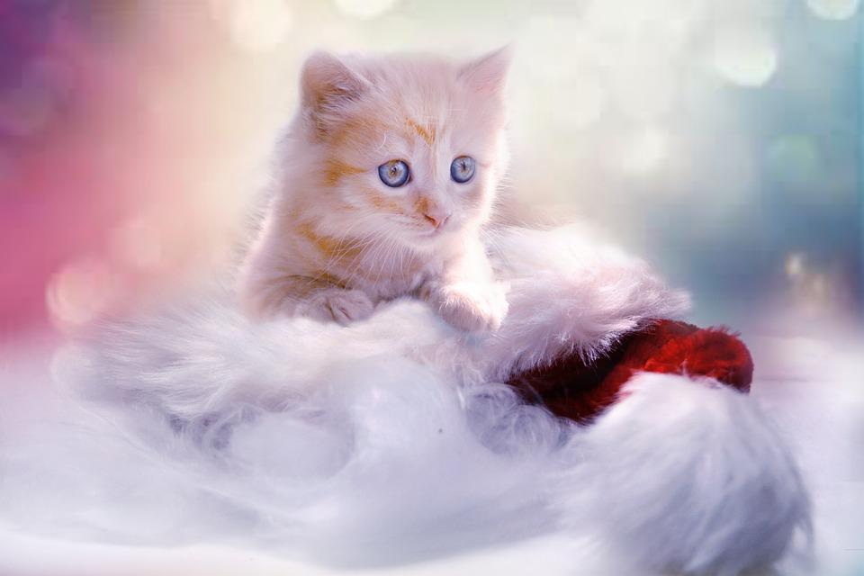 Un sonido único de los gatos: El ronroneo