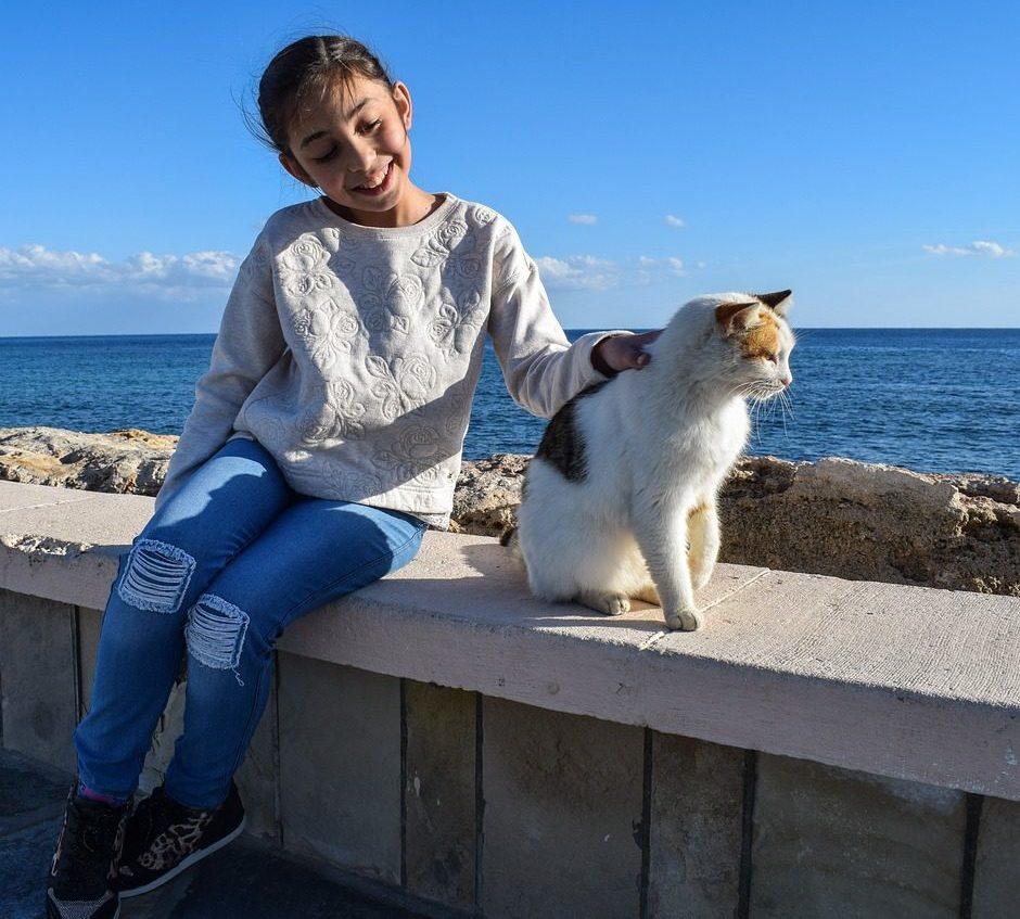 18 síntomas que tiene un gato insolado
