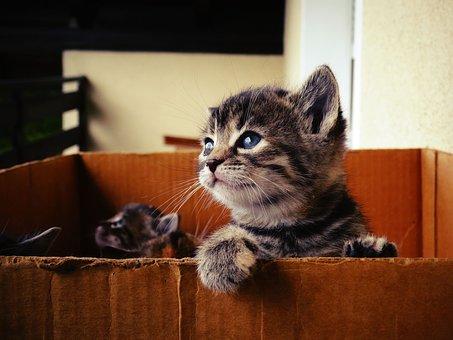 ¿ Sabías que nadie debería poner cascabel al gato ?