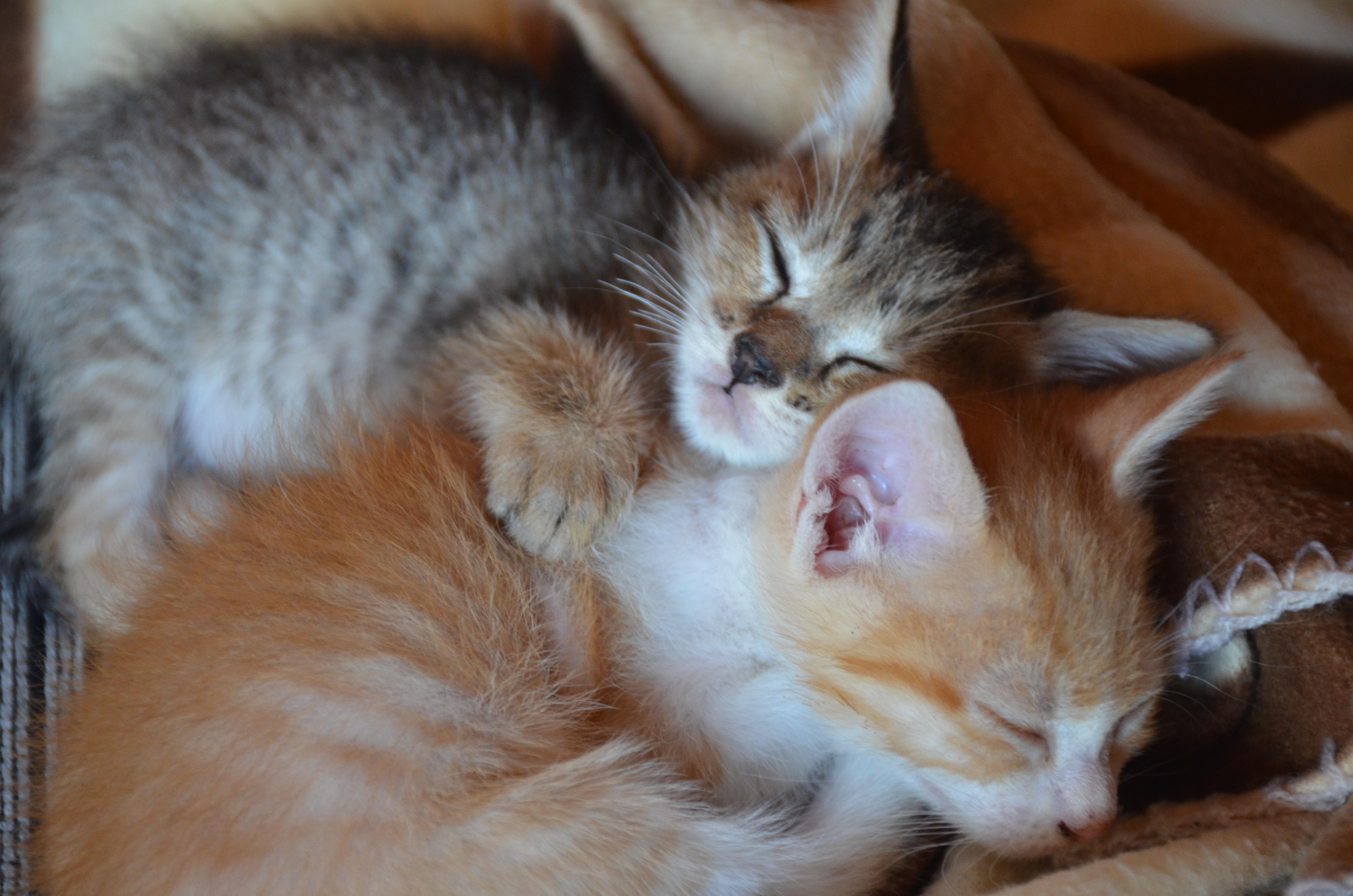 Francia otorga a gatos y perros derechos de ser vivo