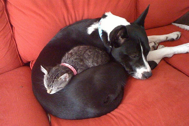 Perro y gato y un abrazo de oso