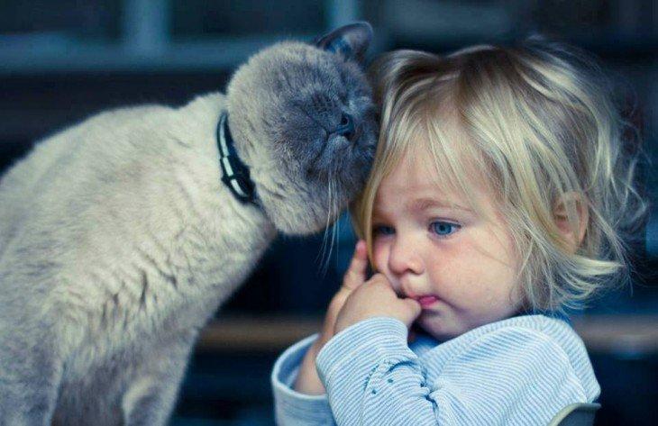10 comportamientos de tu gato, que demuestran su estado de ánimo