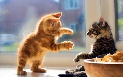 ¿Cuàl es el origen de la agresividad en los gatos?