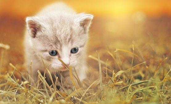 15 imágenes de gatitos….para endulzarnos la vida.