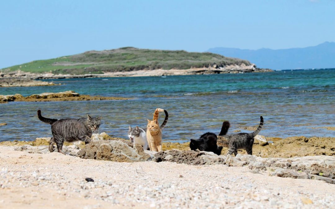Una playa conquistada por los gatos…¿ La conoces?